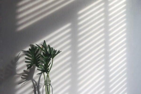 shadow wall wooden