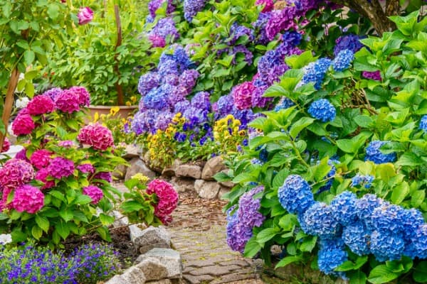 summer garden pathway