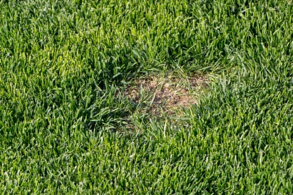 bare patch on a lawn
