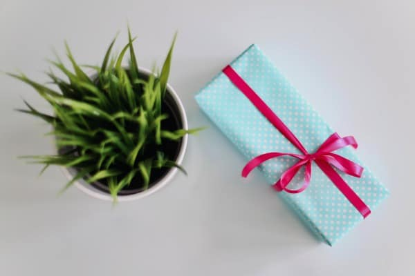 plant beside a small gift
