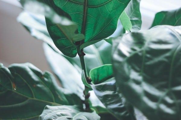 plant closeup image