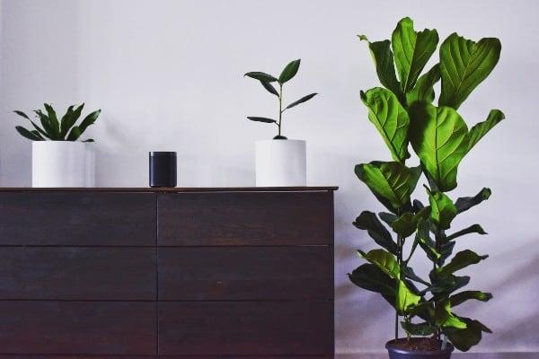 plants on vase