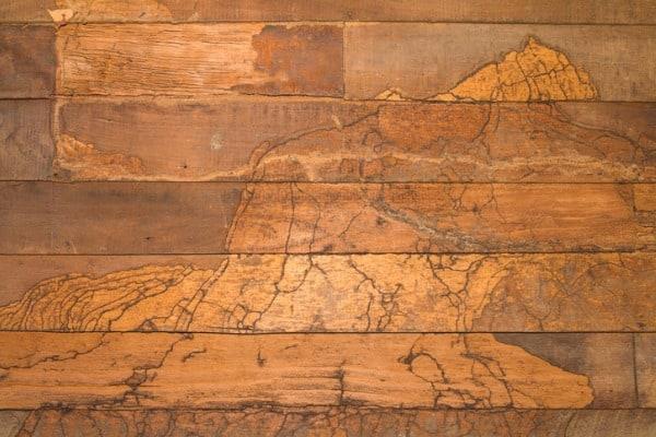 wall wood termites