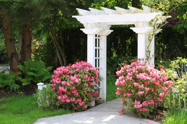 trellis for backyard