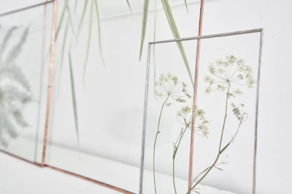 pressed flowers in glass