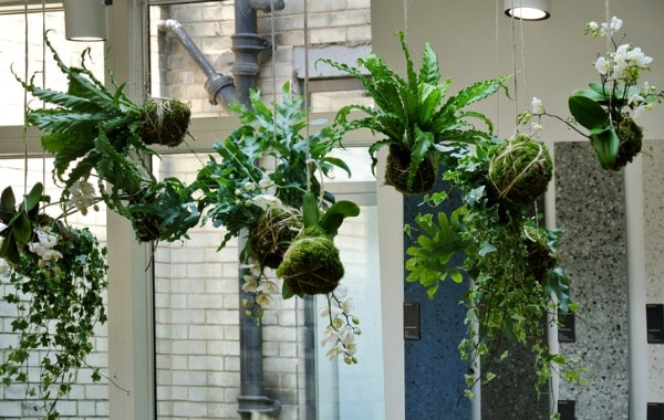 Hanging plants from ceiling