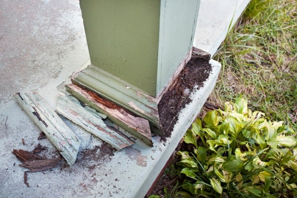 damage from termites to house