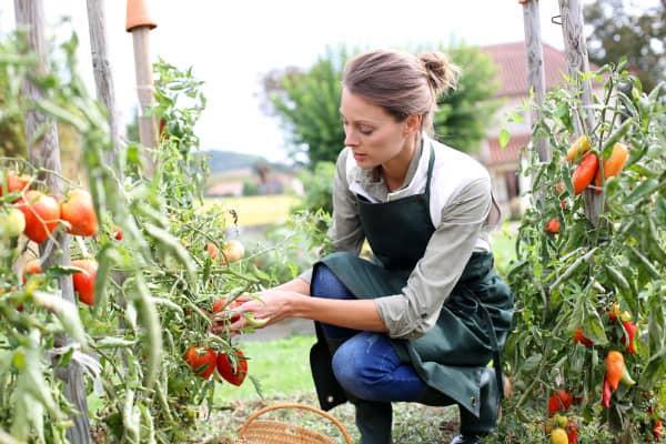expert-gardening