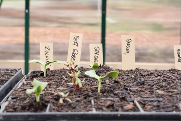 label-plants