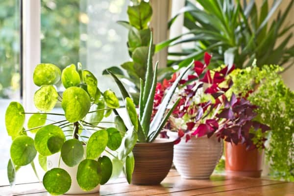 plants blocking window