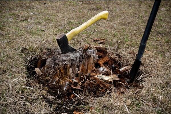 uprooting-tree-stump