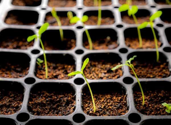 garden-seed-trays