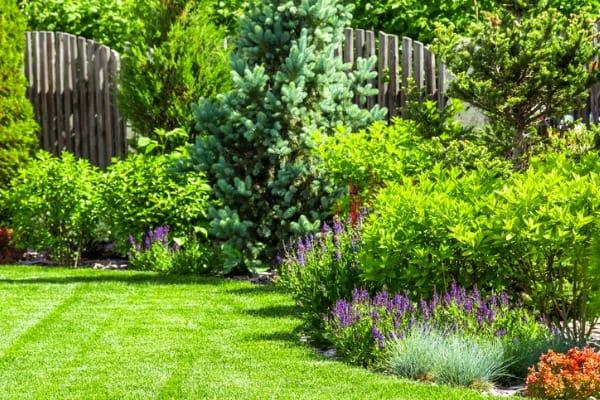 landscape-plants-backyard