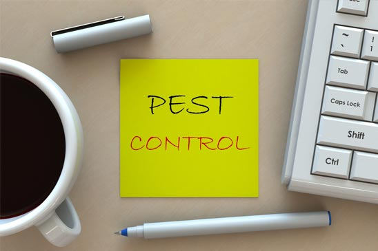 pest-control-options