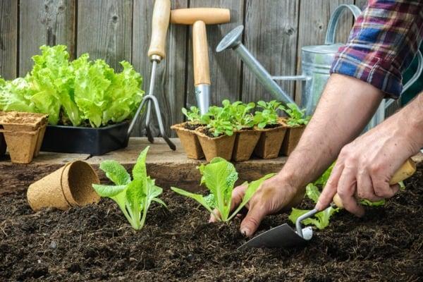 planting-seedlings