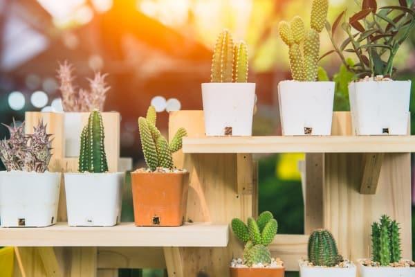 plants-on-patio