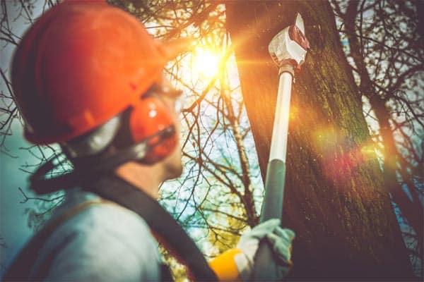 trim-dead-tree