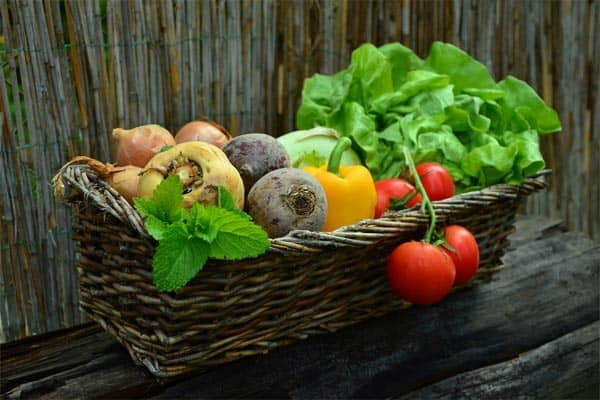 veggies-from-garden