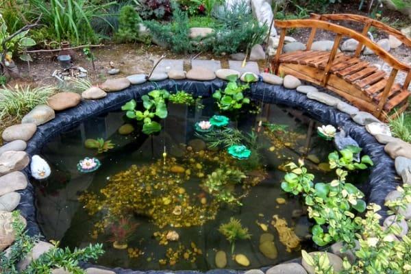 backyard-pond-with-water-plants