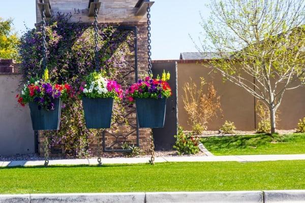 nice-greenery-backyard