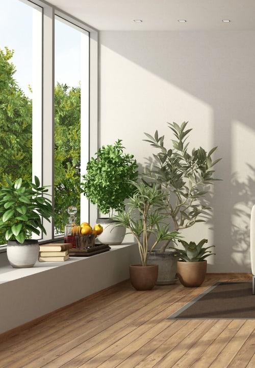 sun-room-trees