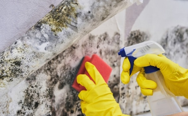 cleaning-black-mold