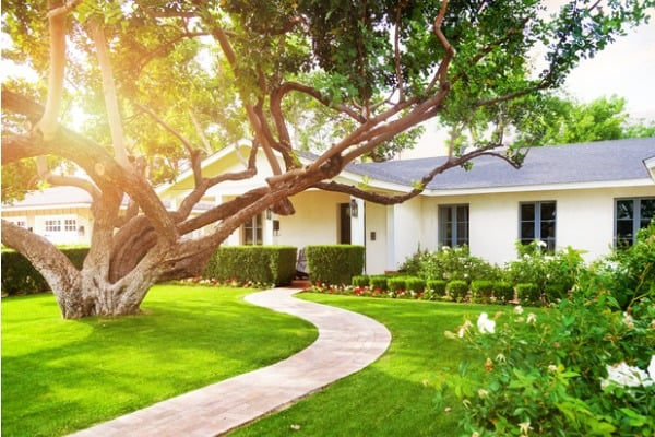 maintain-big-tree-yard