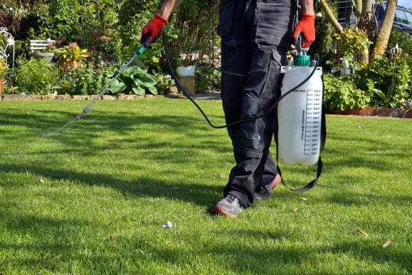 man spraying weed killer in lawn