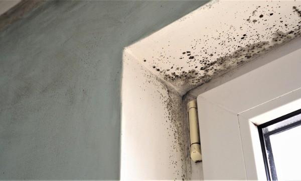 toxic-black-mold-growth