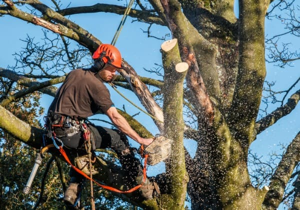 tree-working-cutting-limbs
