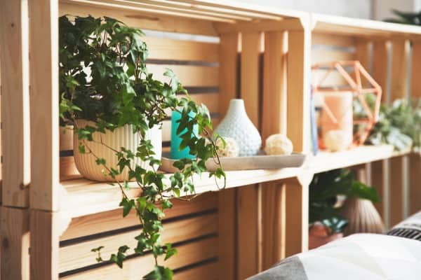 wooden shelves with plants