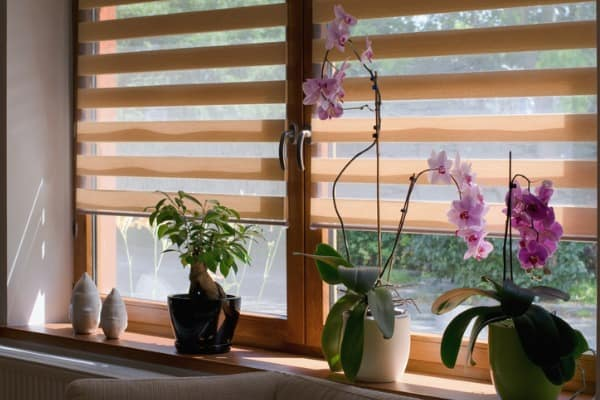solar-daytime-blinds