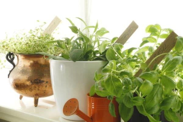 herbal plant garden kitchen