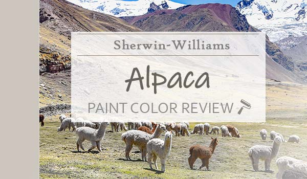 sw alpaca paint color review