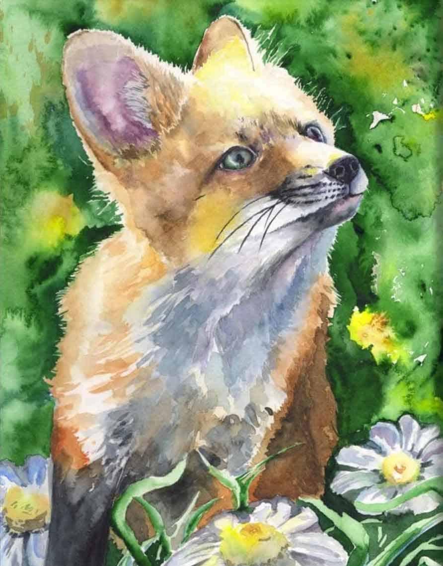 barbuda cute fox