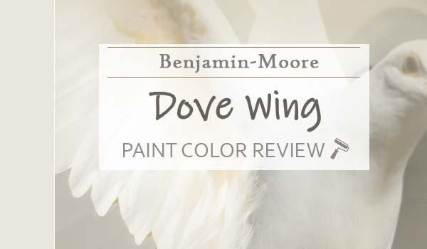 bm dove wing featured image