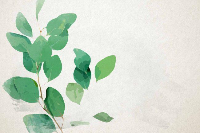 bright green watercolor eucalyptus