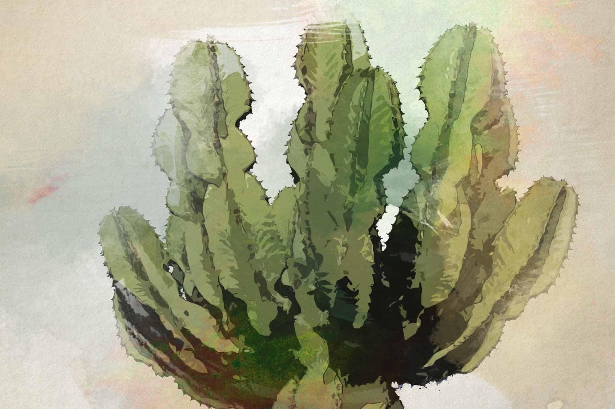 cactus green blue