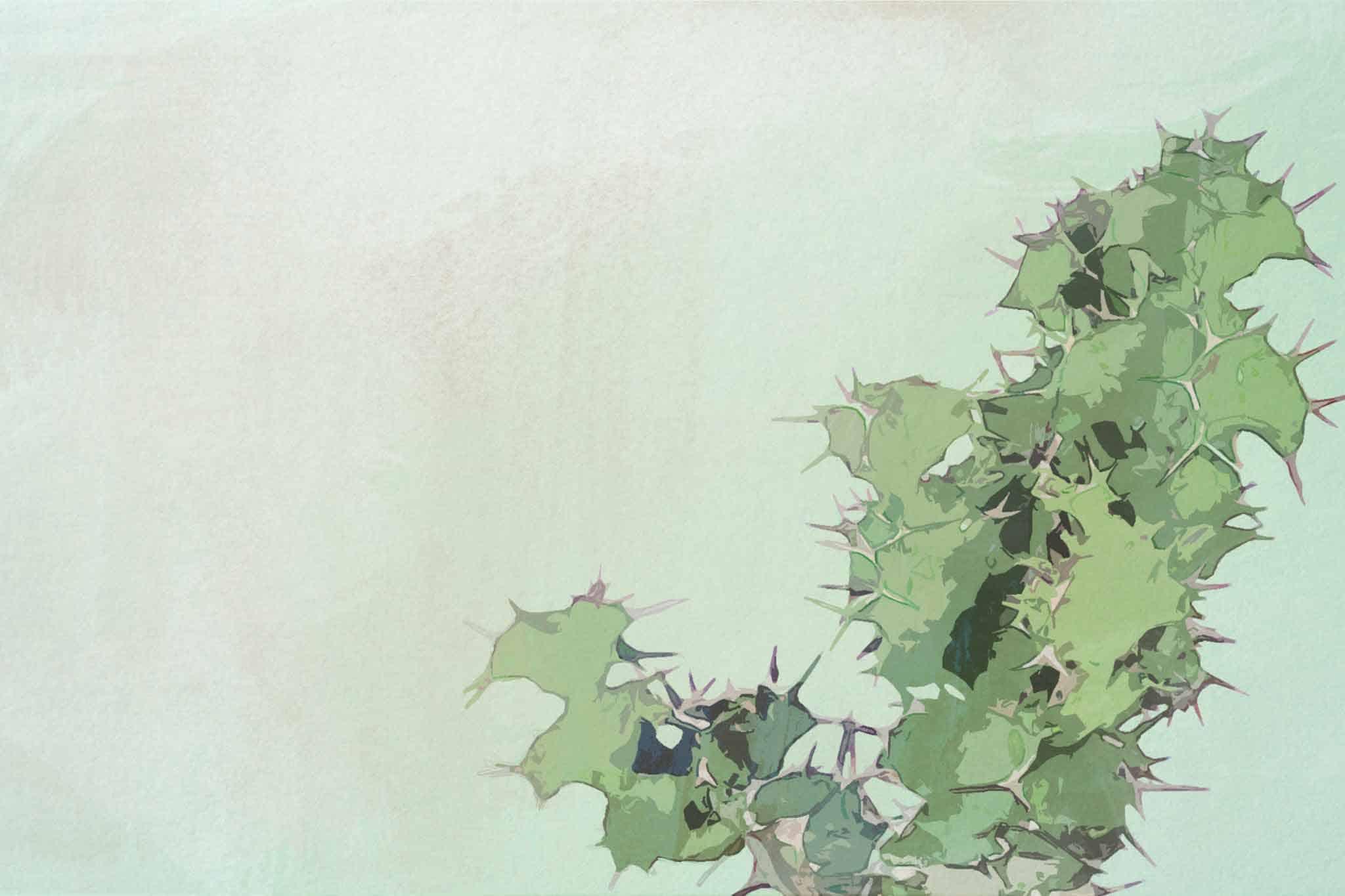 cactus green flora brown