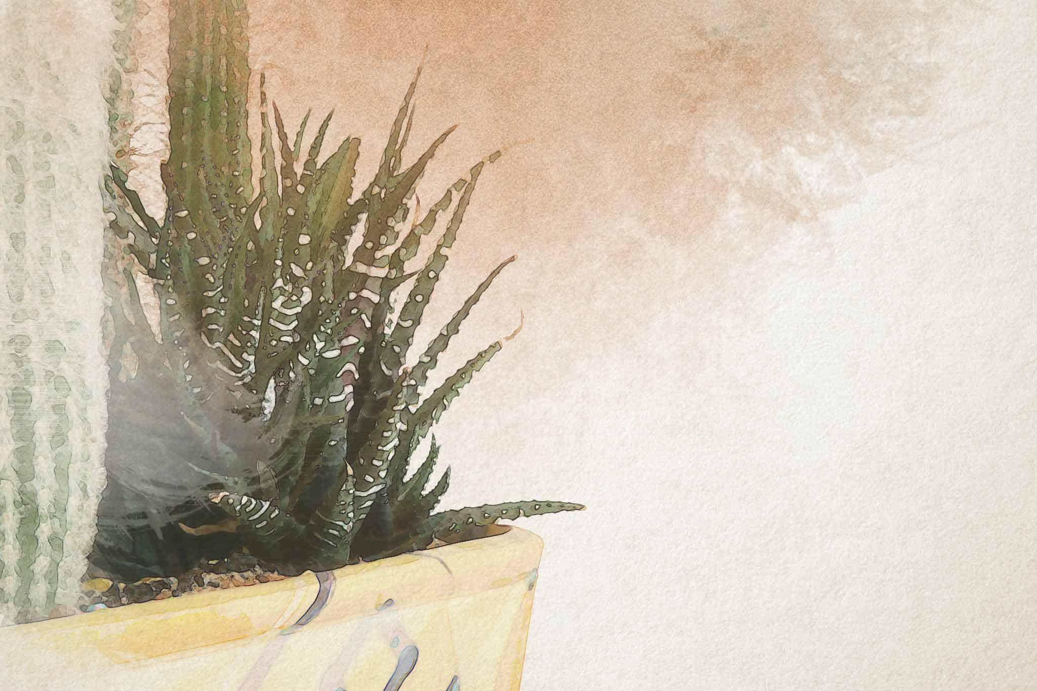 cactus green flower pot