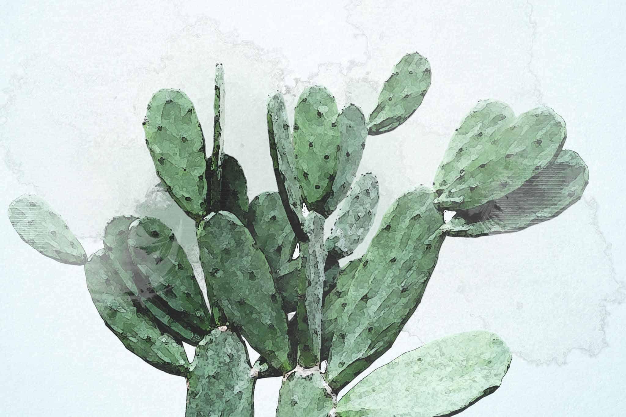 cactus green flowers