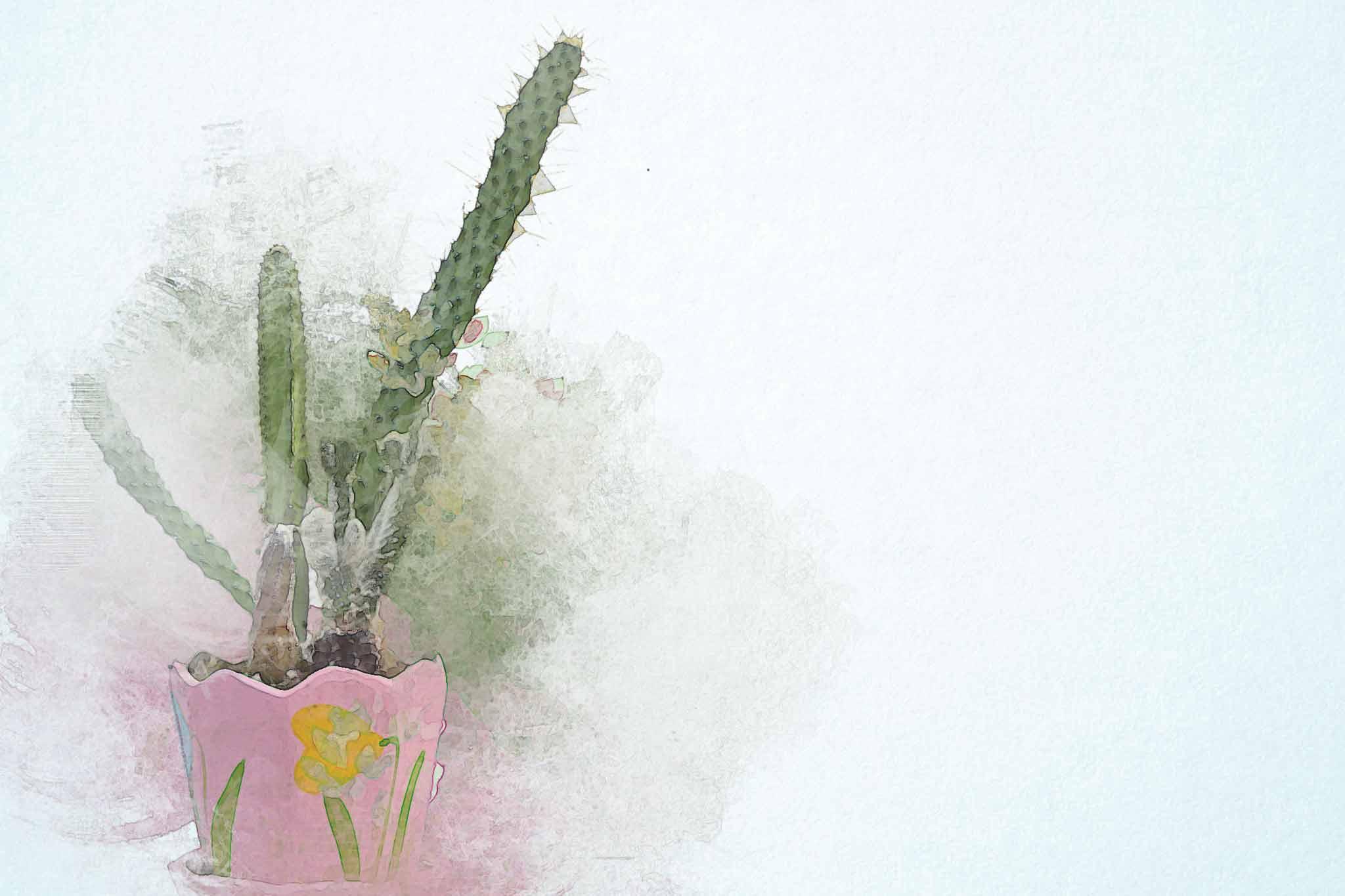 cactus green pink pot flowers
