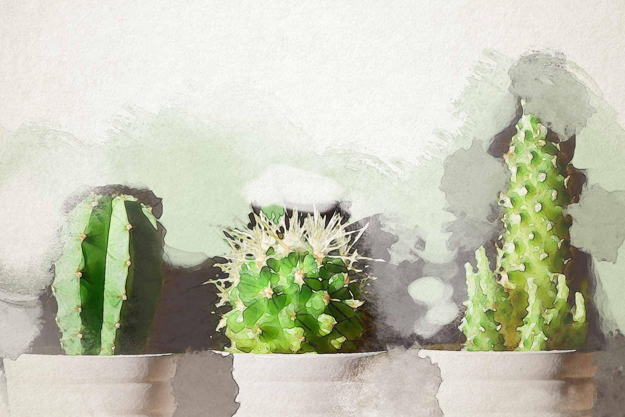 cactus green pot flora three