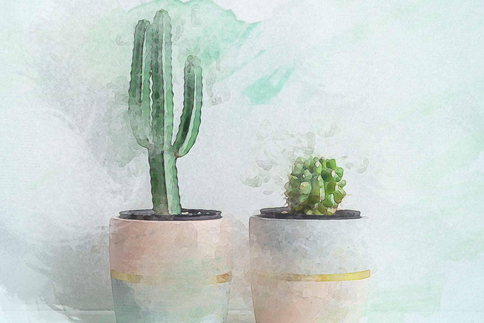 cactus green pot flora twin