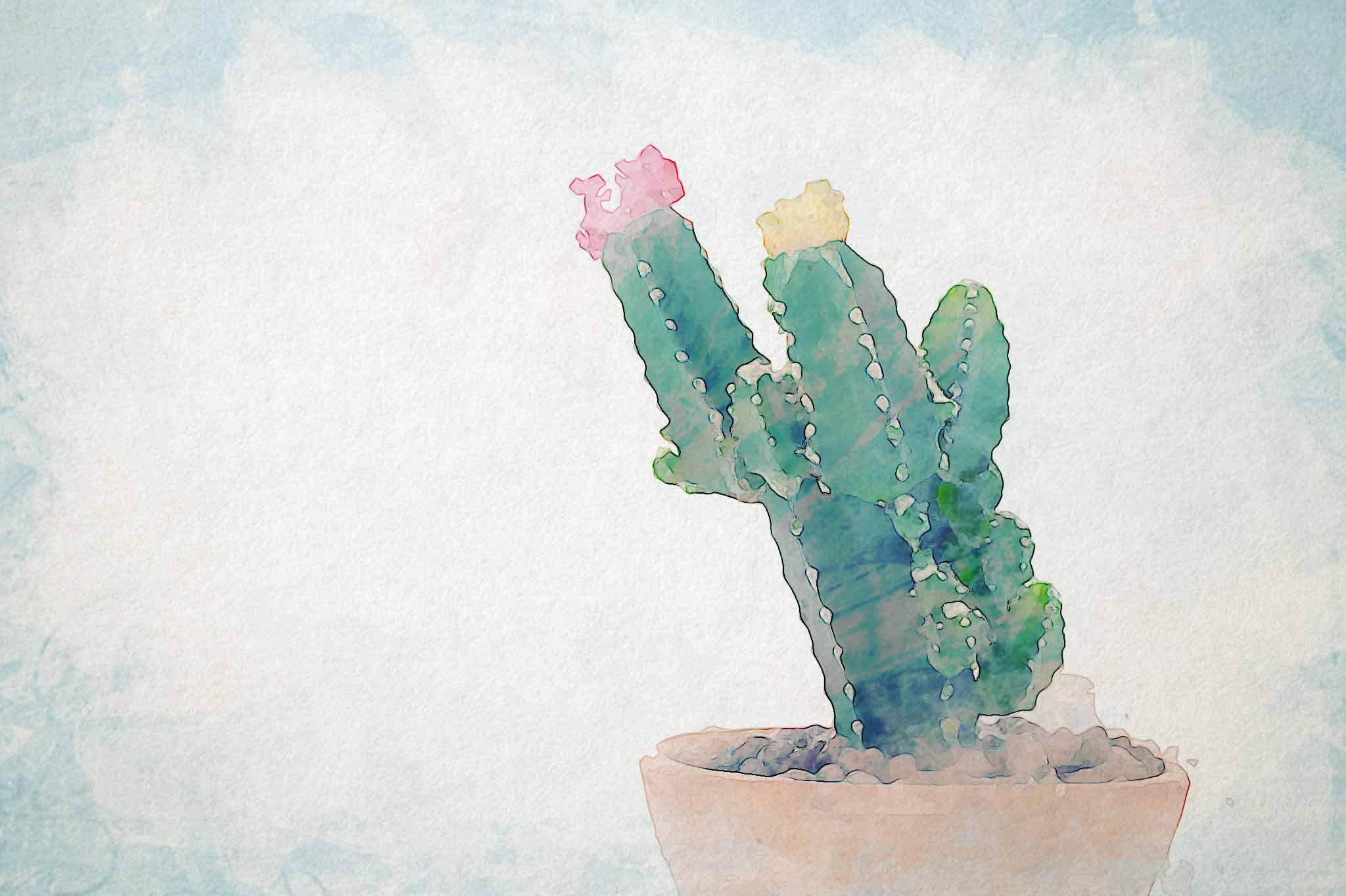 cactus green pot flora