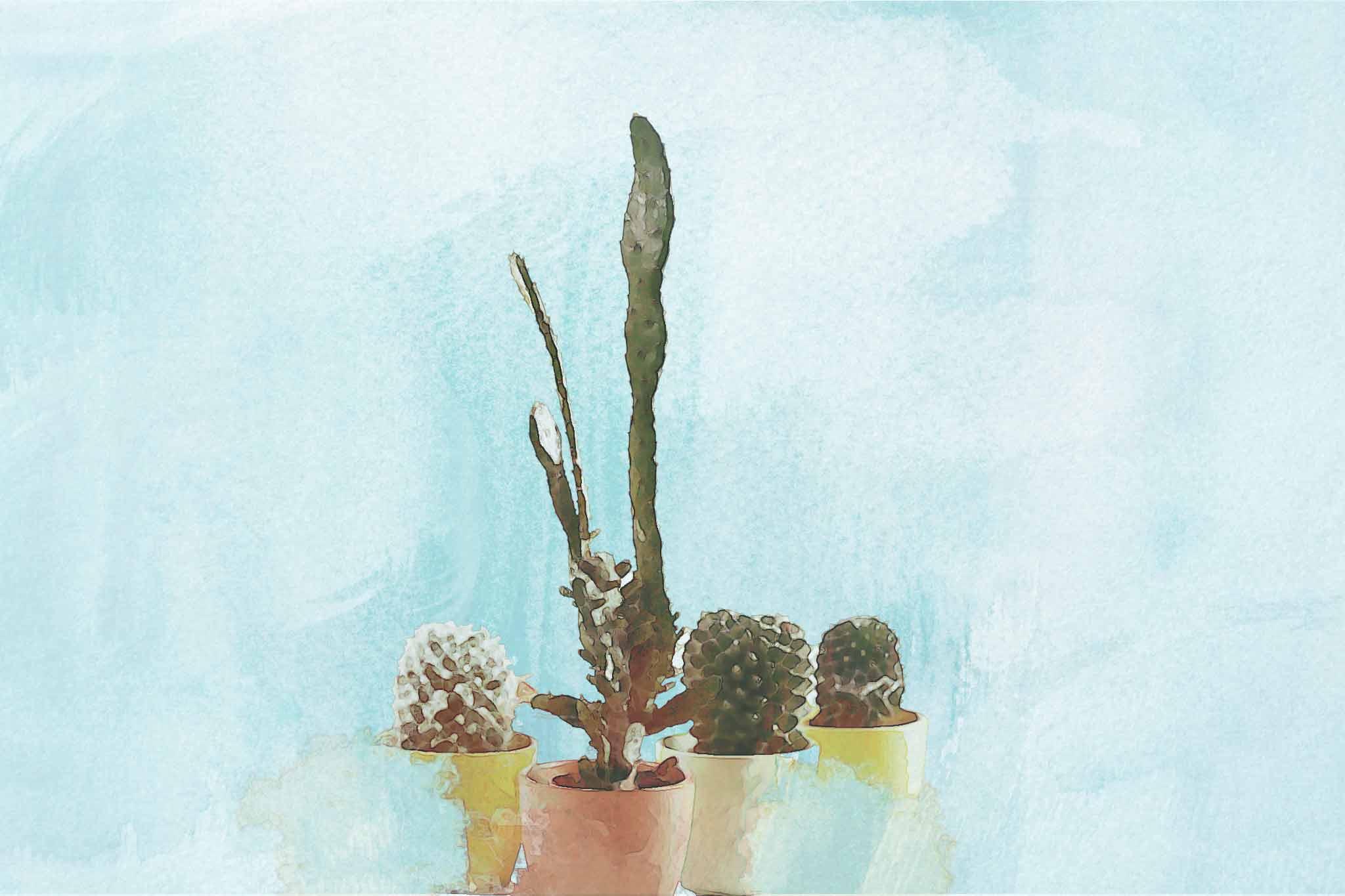 cactus green pot flowers