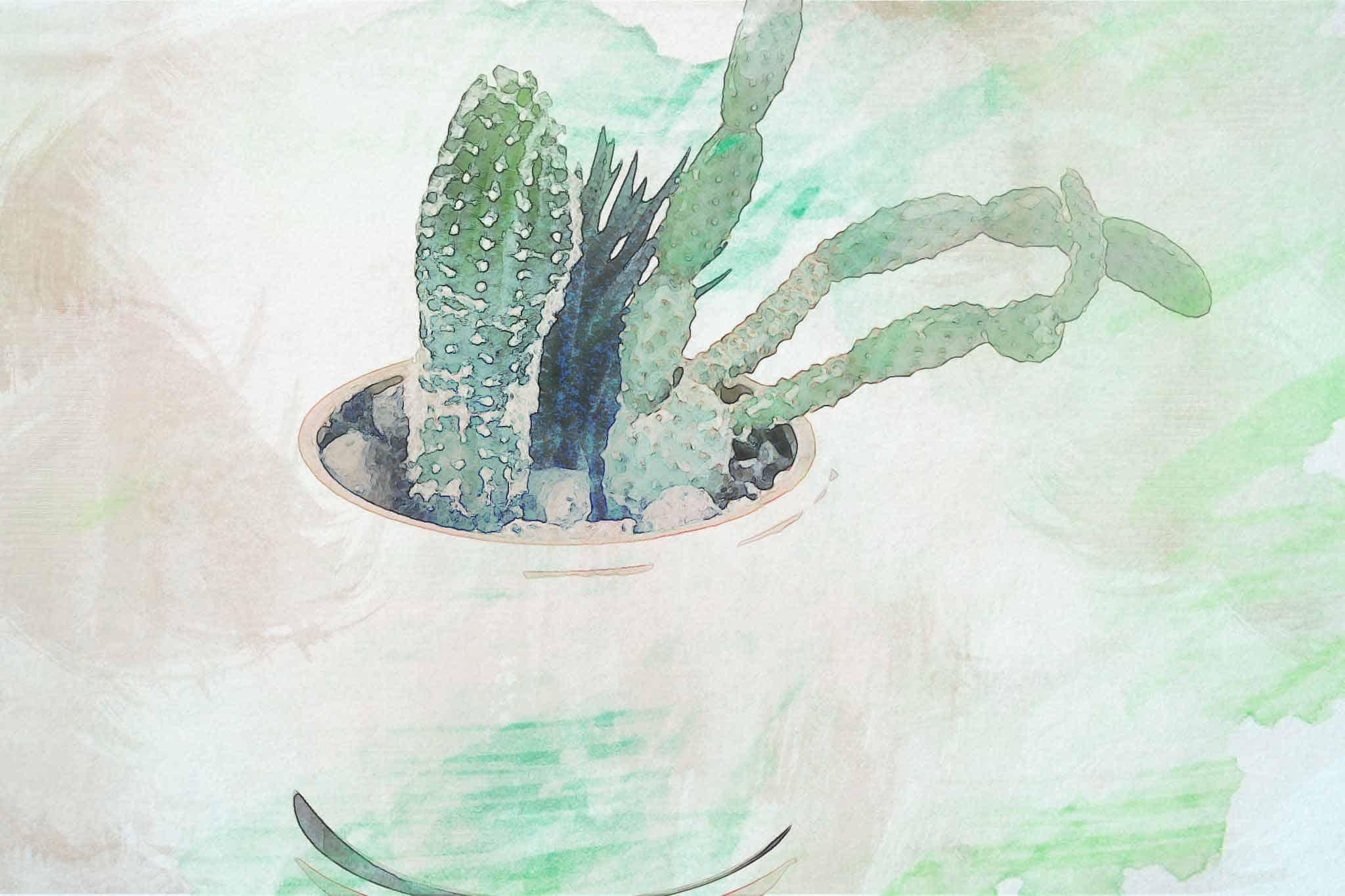 cactus green pot white