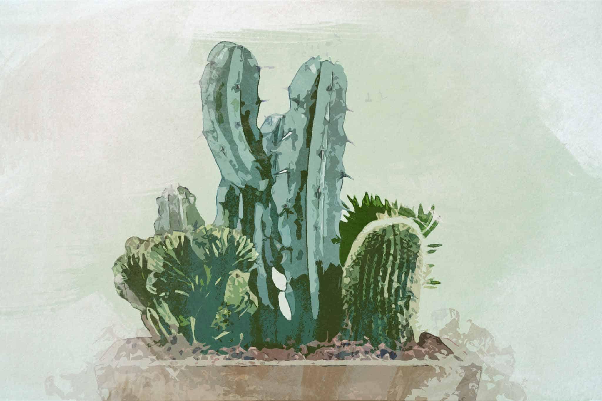 cactus green wood pot