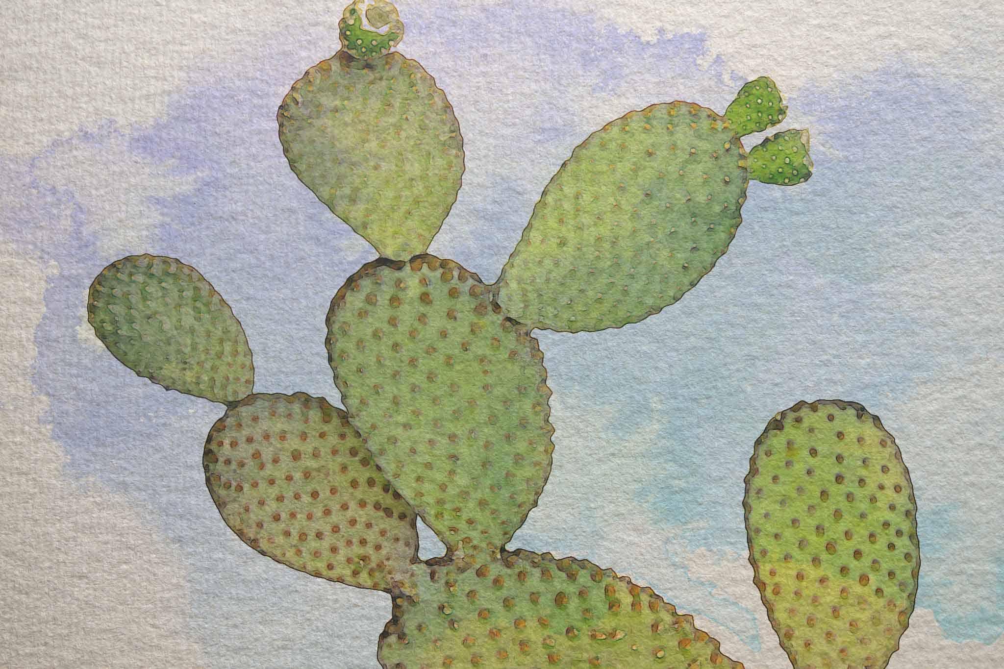 cactus in sky