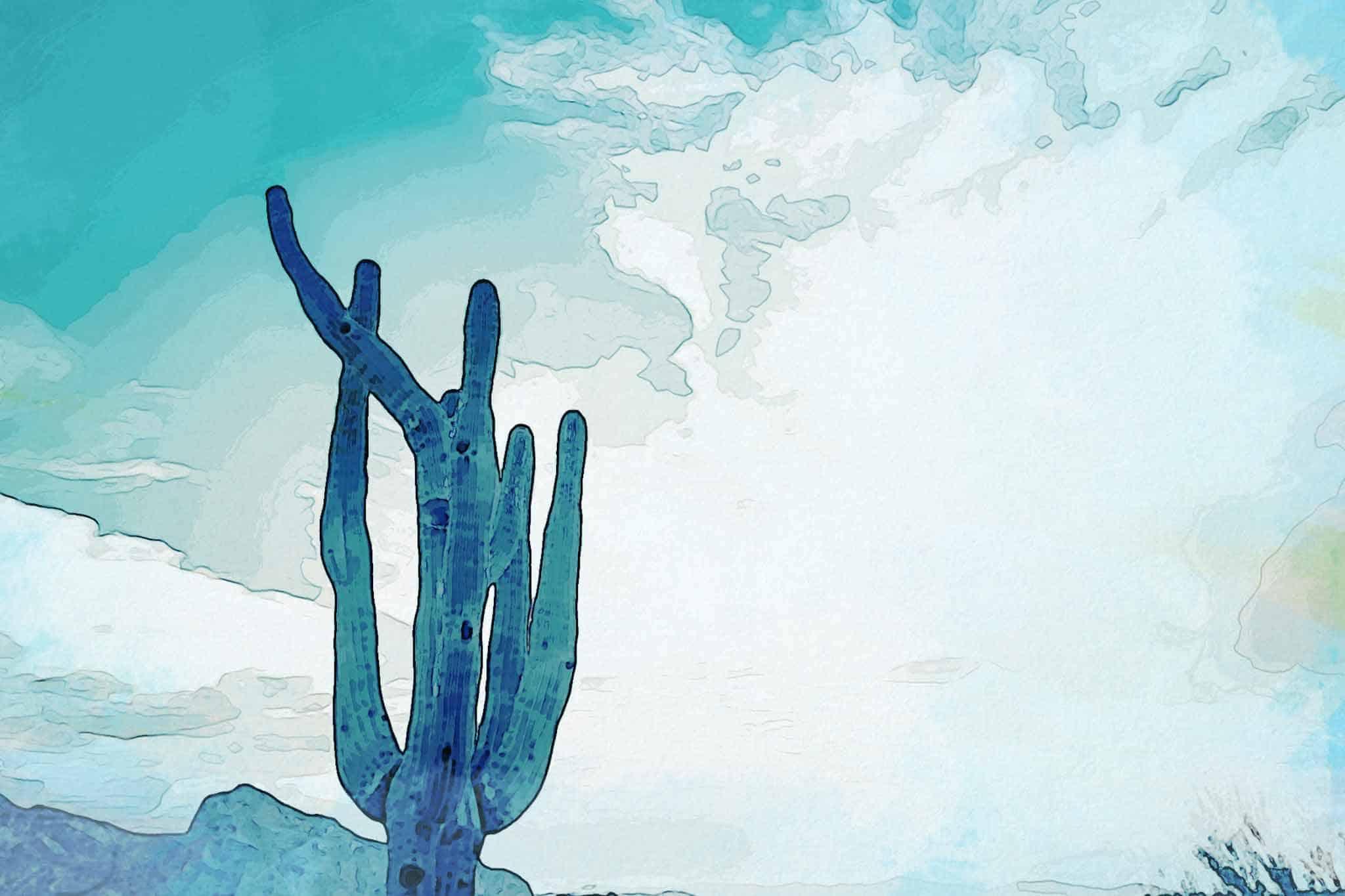 cactus new blue mountain